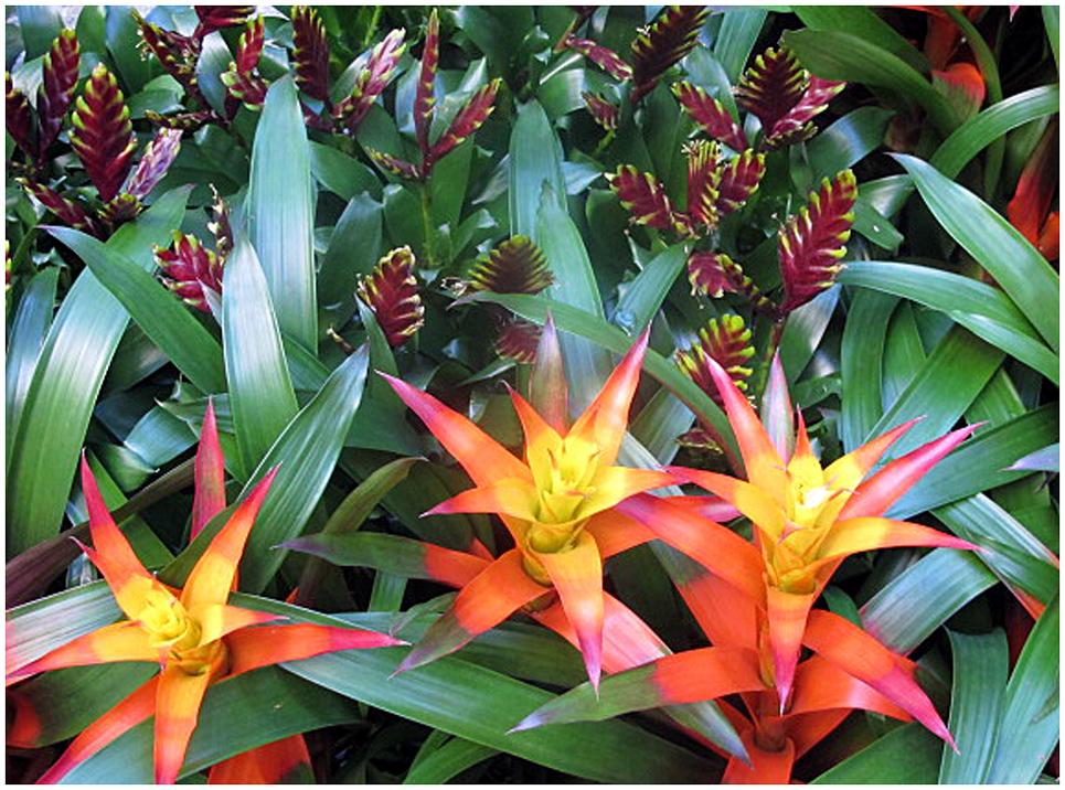 7. tropical flowers photo